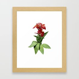 Red Canna Lily Framed Art Print