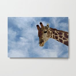 Giraffe Looking from Above Closeup Metal Print