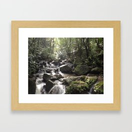 Rainforest Framed Art Print