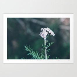 Flower Photography by Siora Photography Art Print