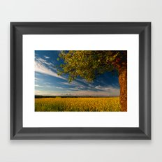 Wonderful springfields with beautiful sky - Rape Framed Art Print