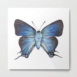 Butterfly - The Great Purple Hairstreak - ATLIDES HALESUS by Magda Opoka Metal Print