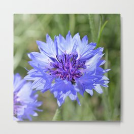Cornflower Blue Metal Print