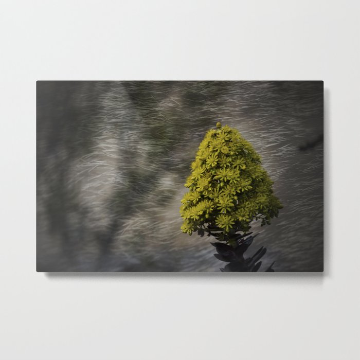 Blooming flowers with texture and vignette Metal Print