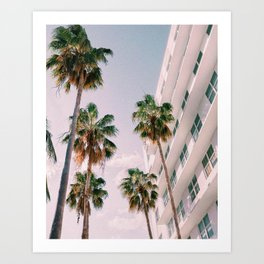 Florida Palms Art Print