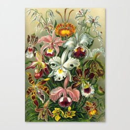 Victorian Orchids Floral Print-Ernst Haeckel Canvas Print