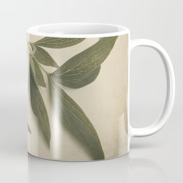 Scents of Spring - Pink Peony ii Coffee Mug