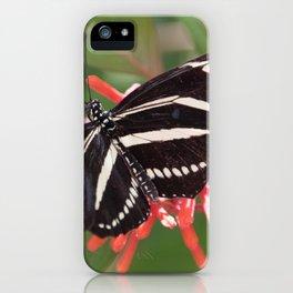 Zebra Longwing Butterfly 3 iPhone Case