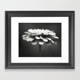 Black and White Flower Photography, Zinnia Floral Photograph, Neutral Nature Photo, Modern Botanical Framed Art Print
