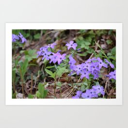A Bunch of Phlox in the Smoky Mountains Art Print