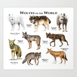 Wolves of the World Art Print