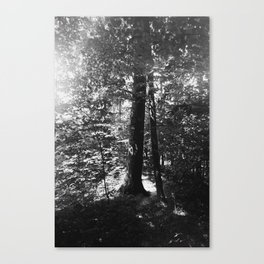 Sherwood Forest Canvas Print