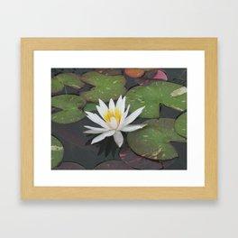 Calm Reflections Framed Art Print