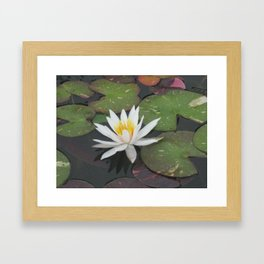 Calm Reflections Framed Art Print