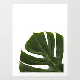 Minimal capture of monstera leaf Art Print