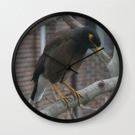Indian Myna DPG150611b Wall Clock