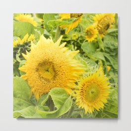Teddy Bear Sunflowers Metal Print