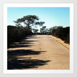 Big Tree along Broken Hill Trail at Torrey Pines State Reserve Art Print