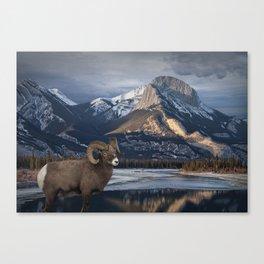 Bighorn Ram Sheep at waters edge in Jasper National Park Canvas Print