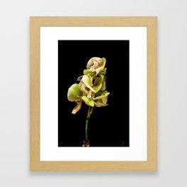 Green orchid Framed Art Print