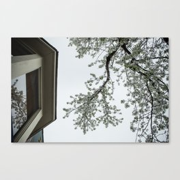 spring bloom reflected in loft window Canvas Print