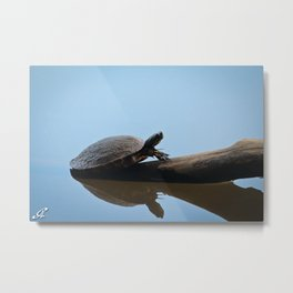 Turtle on The Lake (Color) Metal Print