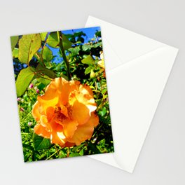 Hyde Park Flowers Stationery Cards