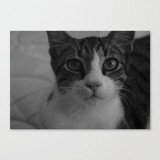 CAT. Canvas Print