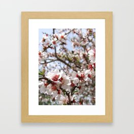 Pink Tree Blossom Framed Art Print