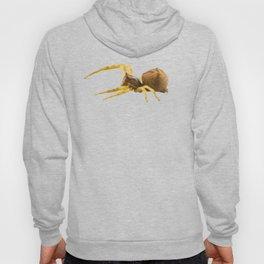 Goldenrod crab spider species Misumena vatia Hoody
