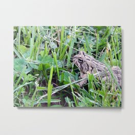 The Waiting Frog Metal Print
