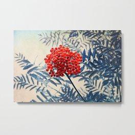 Rowan Berries Metal Print