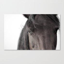 Mysterious Horse Canvas Print