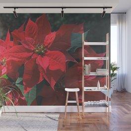 Poinsettia - Euphorbia pulcherrima Wall Mural