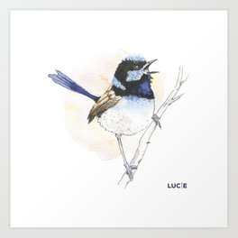 Superb-Fairy Wren Art Print