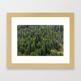Wall of Trees Framed Art Print