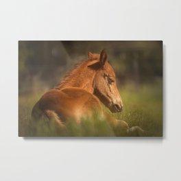 Cute Foal Laying Down Metal Print