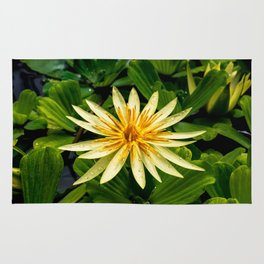 Yellow water lily Rug