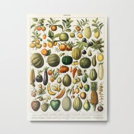 Fruits Vintage Scientific Illustration French Language Encyclopedia Lithographs Educational Metal Print