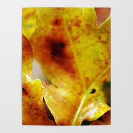 Autumn leaves print. Poster