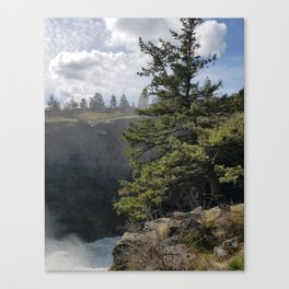 Beside The Falls, Beautiful Old Pine Tree Stands Sentry Beside A Watefall Canvas Print