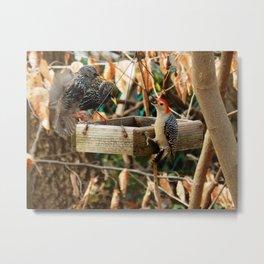 This is MY birdfeeder! Metal Print
