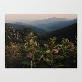 Milkweed in Shenandoah National Park Canvas Print