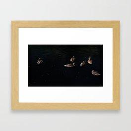 Ducks floating in the night sky. Framed Art Print