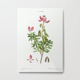 Ononis fruticosa from Traité des Arbres et Arbustes que l'on cultive en France en pleine terre (1801 Metal Print