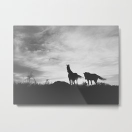 Horses on the Westcoast of South Africa Metal Print