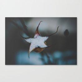 _DSC7078 Canvas Print