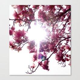 Springtime Bliss Canvas Print