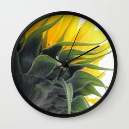 Backside of a Blooming Sunflower Wall Clock