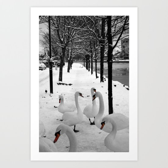 Swans in the snow Art Print